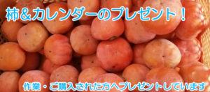 柿のシーズン到来